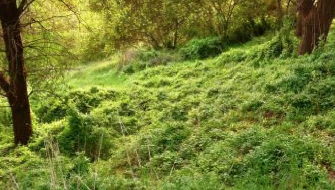 weeds-in-sa